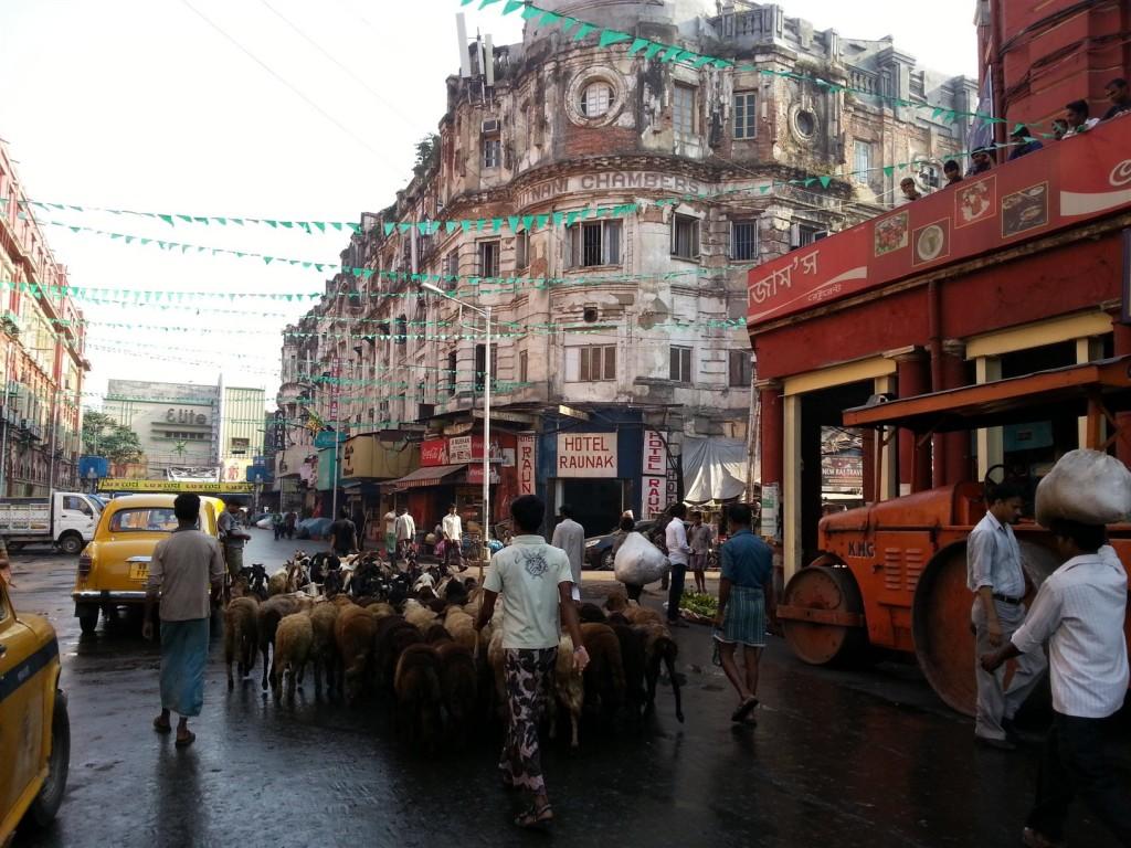 Kolkata sokaklarında her an herşeyle karşılaşmanız mümkün. işte size bir koyun sürüsü=)