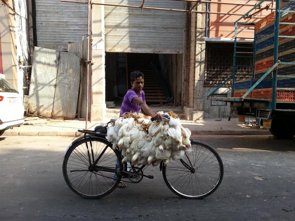 Tavukçudan aldığı tavukları bisikletine yükleyip götüren Hintli bir çocuk. Fotoğraf çektiğimi görünce durup poz verdi sağolsun. Asya'nın sıcak ve samimi insanları...